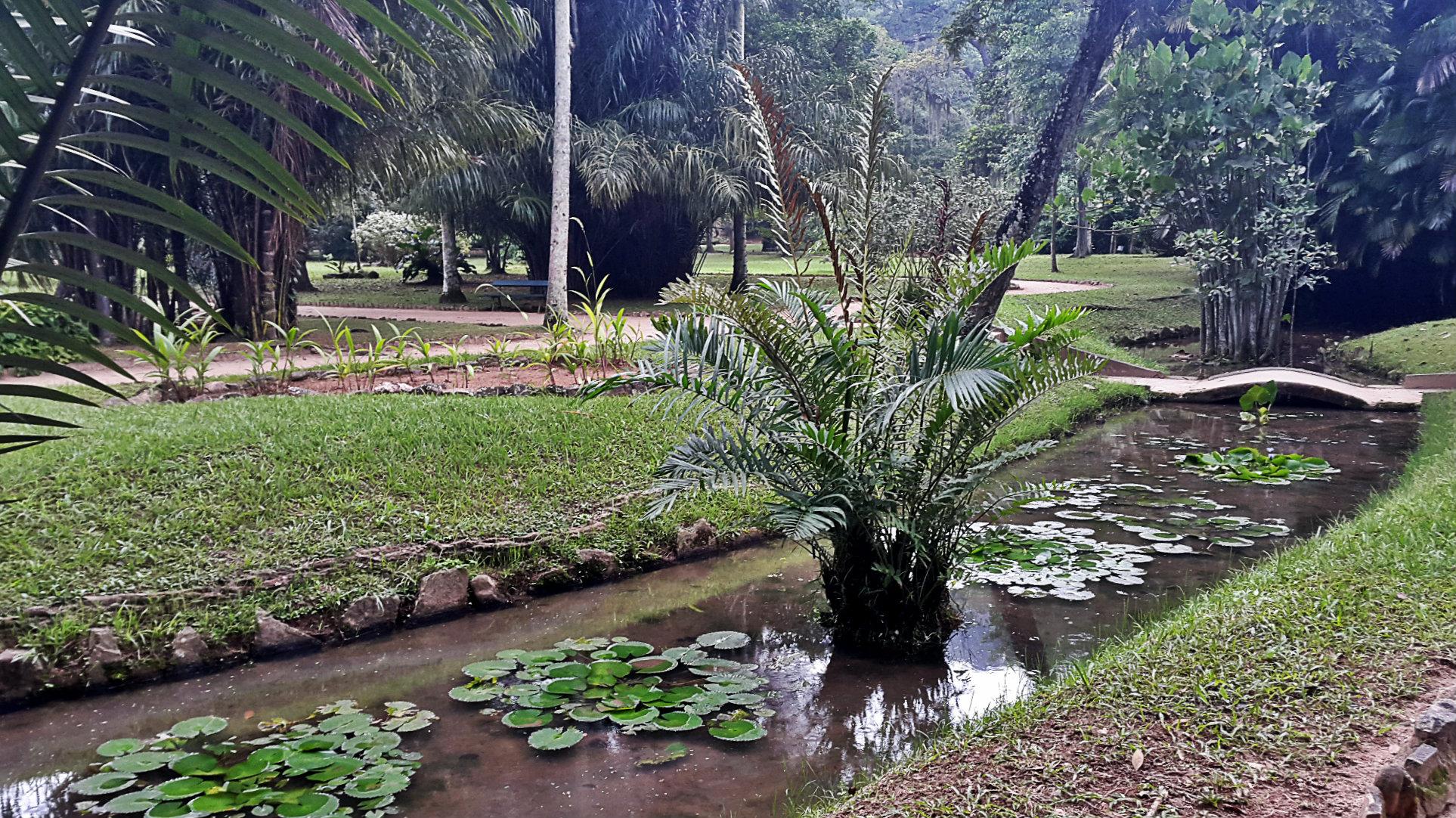 Espejos de agua en el Jardín Botánico
