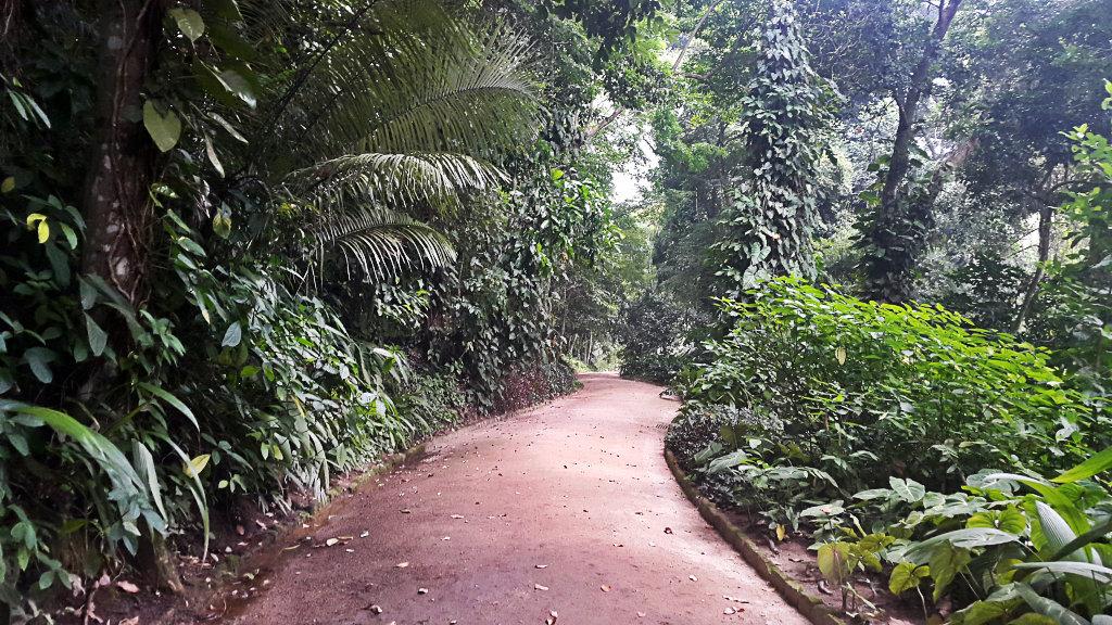 Senderos en el Jardín Botánico
